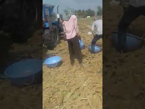 Paddy multe crop thrasher  MALWA AGRO INDUSTRIES  g t road  malout (pb)  9417783241 9417784241