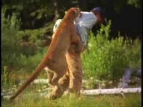 Image result for Cougar attacking man