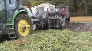 Pik Rite HC 290 harvesting tomatoes in muddy conditions.