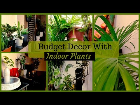 Budget Decor with Indoor Plants|| Low Budget Indoor Plants Home Decor ideas