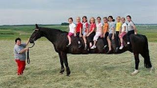 GRÖSSTE Pferd der Welt