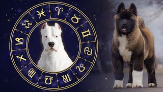 The Best Dog Breeds For All 12 Horoscope Signs
