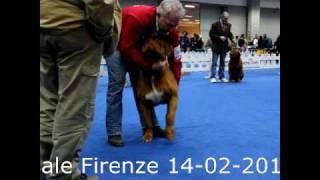 Expo' Internazionale Firenze 14-02-2010 Tito Emberez