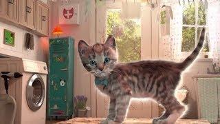 Play Fun Pet Care Kids Game -Little Kitten My Favorite Cat - Fun Cute Kitten For Children part-2