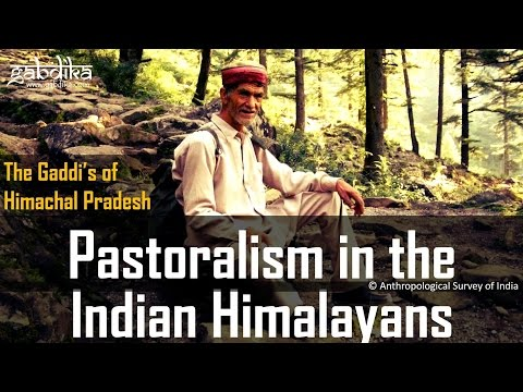Pastoralism in the Indian Himalayans