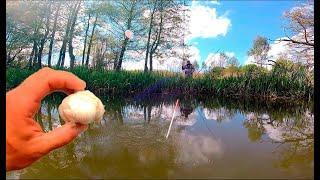 ЛОВЛЯ КАРАСЯ НА ЧЕСНОК Рыбалка на маховую удочку