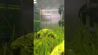 램프아이와 체리새우가 노닐뿐인 영상