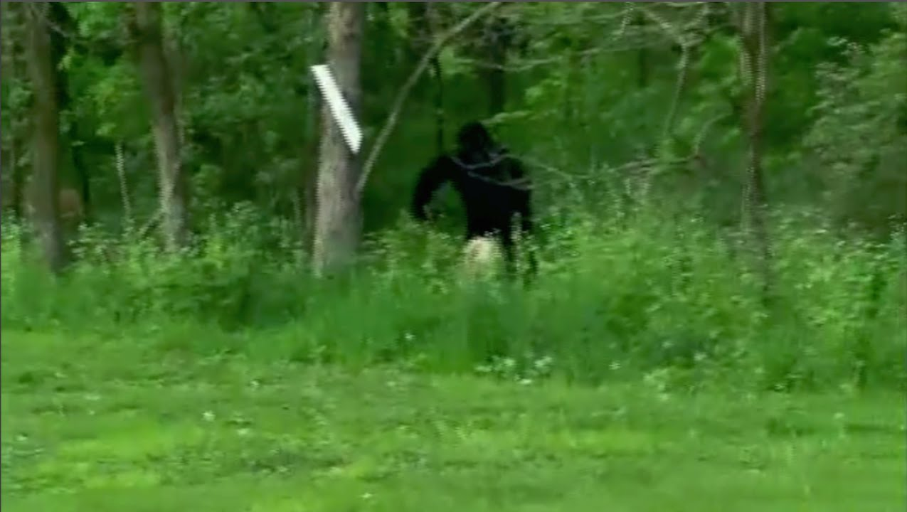 Bigfoot caught on tape (REAL) - YouTube