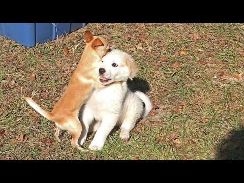 Fifi Teaches The Puppy How To Play