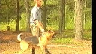 Секретные возможности от фактора неожиданности разных пород собак