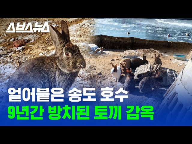 논란의 송도 토끼섬, 문제점 낱낱이 파헤쳐 봄  / 스브스뉴스