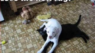 Смешни животни и хора-Видео и снимки-котки котка куче