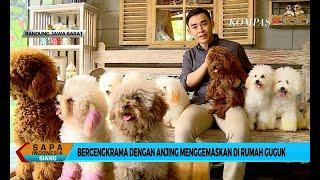 Yuk Main <b>Sama Anjing</b> Menggemaskan di Rumah Guguk