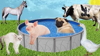 PUG AND PIG DO NOT ALLOW OTHER ANIMALS INTO THE POOL Learn Colors with Farm Animals Pool for Kids
