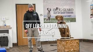 Chesapeake Bay Retriever Learns Place | Off Leash K9 Training