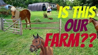 Is this the right horse farm for us! Day 240 (08/29/17)