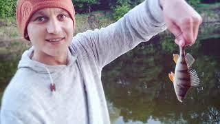 Сом на печень Хорошая рыбалка на сома в мае