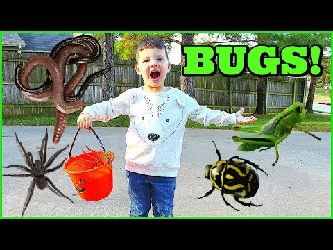 BUG HUNT With Caleb & Mommy! CATCHING BUGS For Kids!