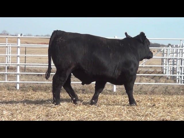 Express Ranches Lot 403