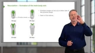 Embryologie : L'implantation / Nidation
