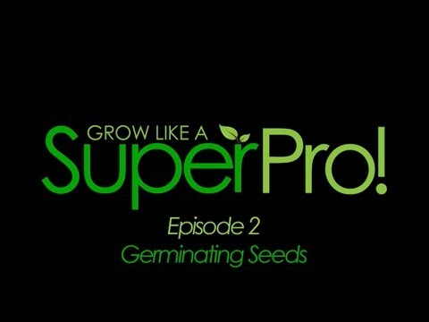 How to Germinate Seeds for Hydroponics | How to Grow Indoor Plants