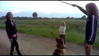 Собака побежала за палкой смех до слез