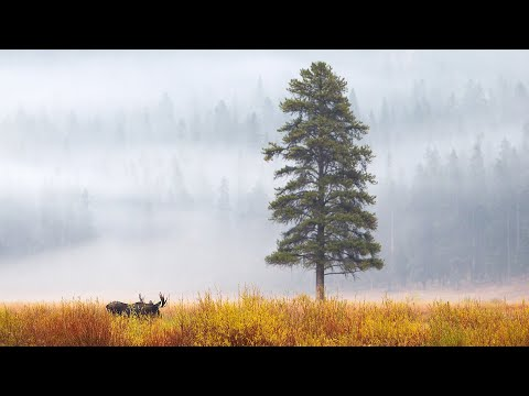 Rites of Autumn: Yellowstone and the Grand Tetons