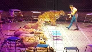 Lions and Tigers Ringling  Bros