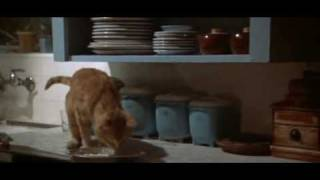 Marlowe tries to feed his cat