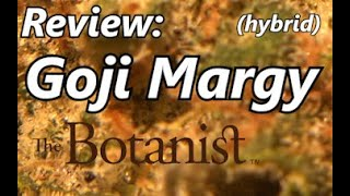 Goji Margy Review (from The Botanist Spring Hill) Florida Medical Marijuana