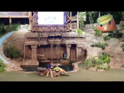 Universal Studios Dog and Animal Actors Show