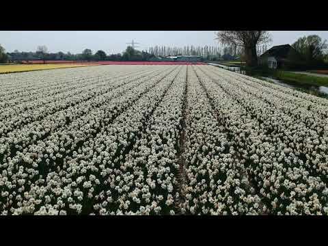 Flower Fields 2018