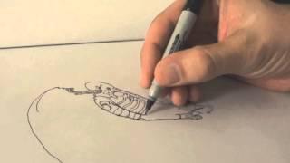 ASMR Drawing the Space Jockey from Alien