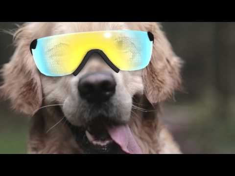 Introducing Dogmented Reality by Meta