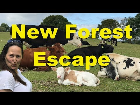 New Forest Pony and Escape London to Lyndhurst