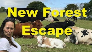 New Forest Pony and Escape London to Lyndhurst thumbnail