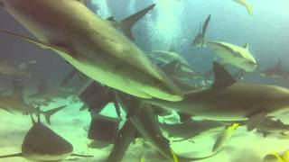 Bahamas Shark Dive