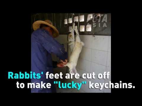 No Furry Keychain Is Worth An Animal's Life