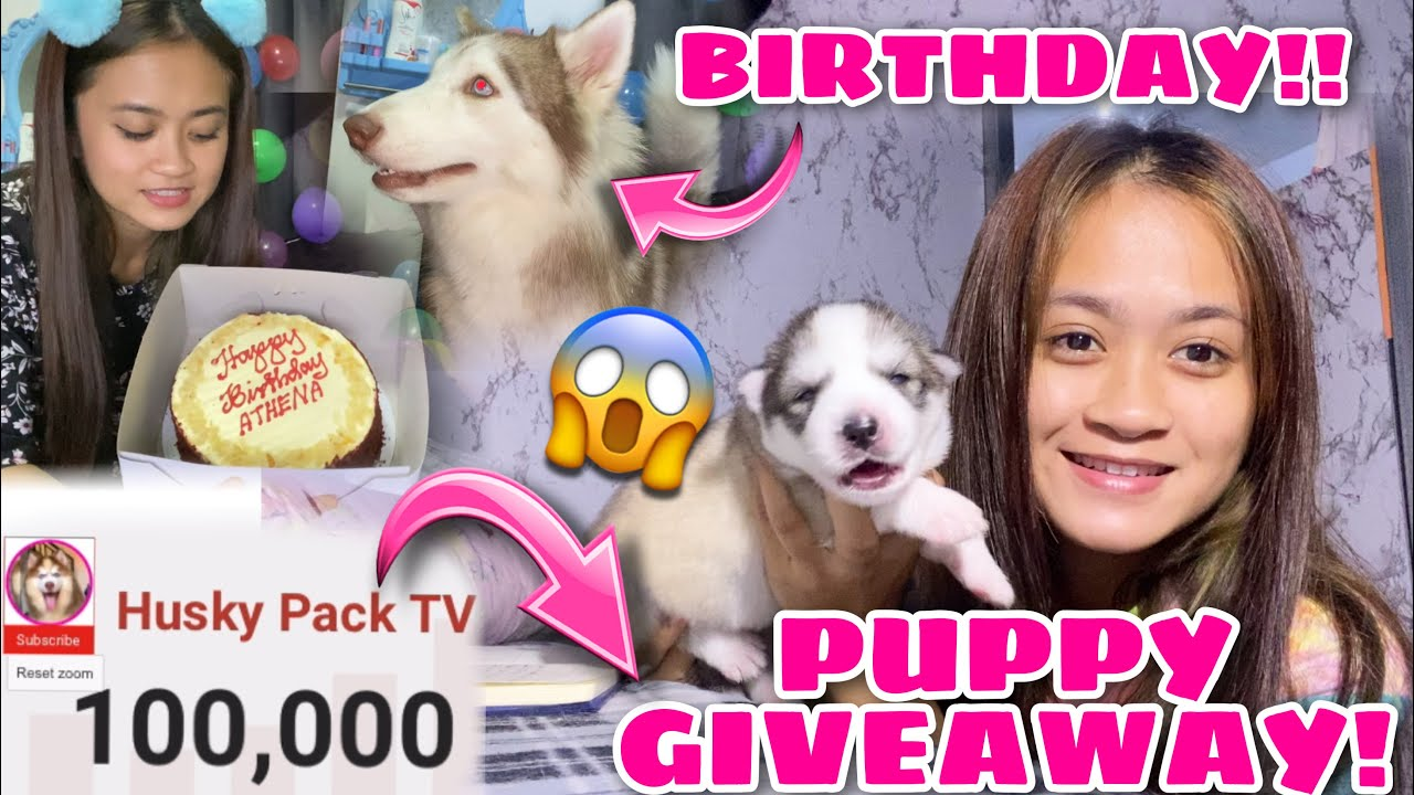 Siberian Husky Puppy Giveaway! | HAPPY 100k SUBS! | Athena's First Birthday | Husky Pack TV