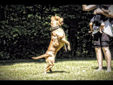 Dog Of The Day EP1 'I am Faith'