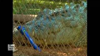 drunk man breaks into zoo bitten by crocodile