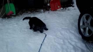 散歩から帰ったら必ず雪浴びです.