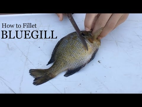 How To Fillet A Bluegill - Simple Instructions With Demonstration