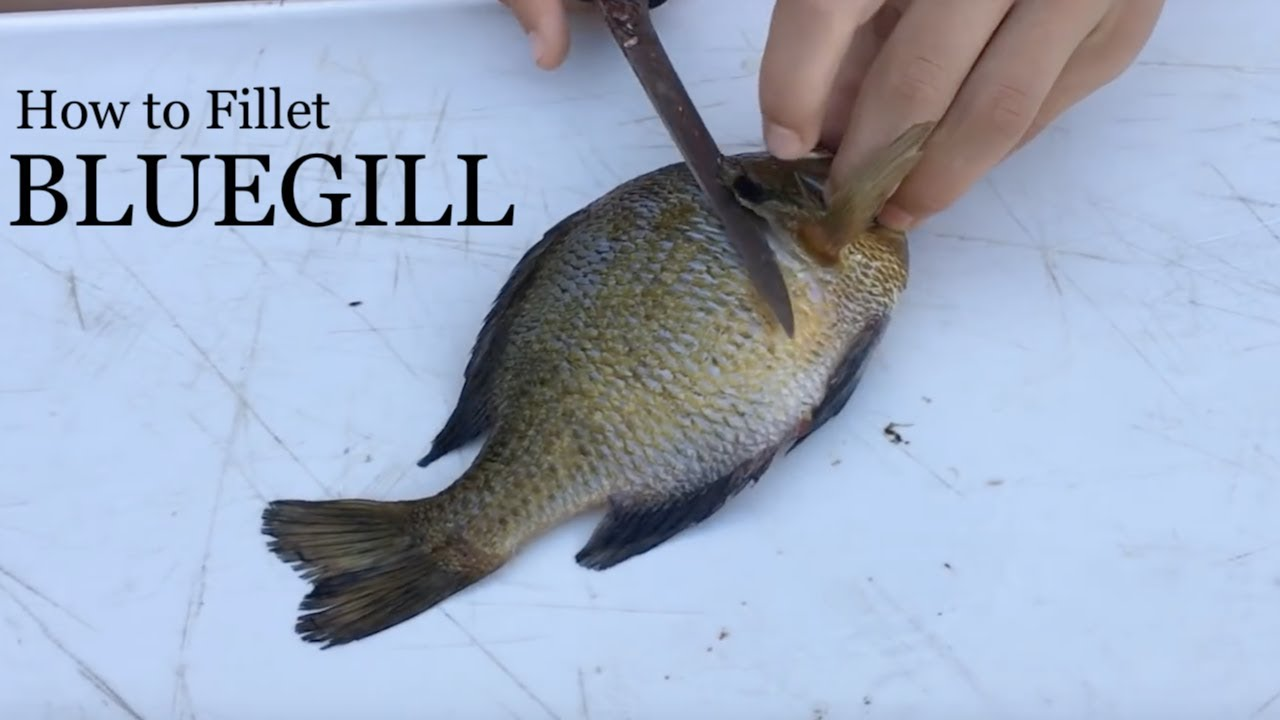 How To Fillet A Bluegill Simple Instructions With Demonstration