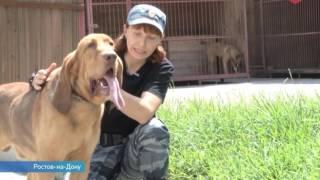 Добродушные собаки-бладхаунды Игрис и Айрон - первые представители своей породы в кинологии ЮФО