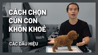 Chọn chó con khôn, khoẻ mạnh - Huấn luyện tốt || BossDog