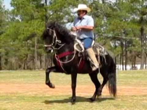 Andalusian caballos bailadores con banda el diablo for Sillas para caballos