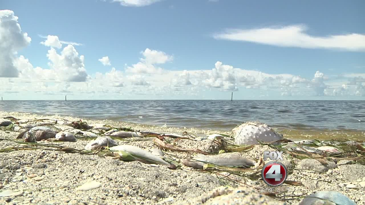 Red Tide Affecting Beaches On Manasota Key