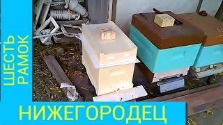 Пчеловодство шестирамочный нижегородец(В этом видео пересаживаю пчёл в шестирамочный улей на зиму., 2016-10-08T04:36:14.000Z)