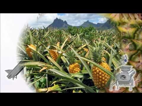 Pineapple juice extraction
